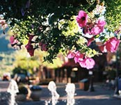 flowers-and-fountain